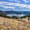 Krokusblüte über dem Walchensee