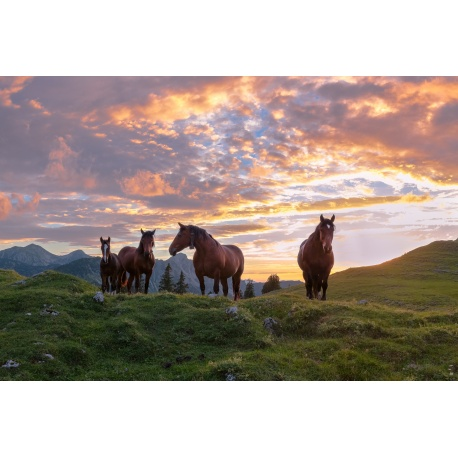 Pferdeglück
