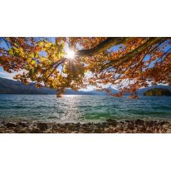 Walchensee-Herbstbuche