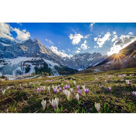 Alpen, Krokus, Berglandschaft, Engalm, Großer, Ahornboden