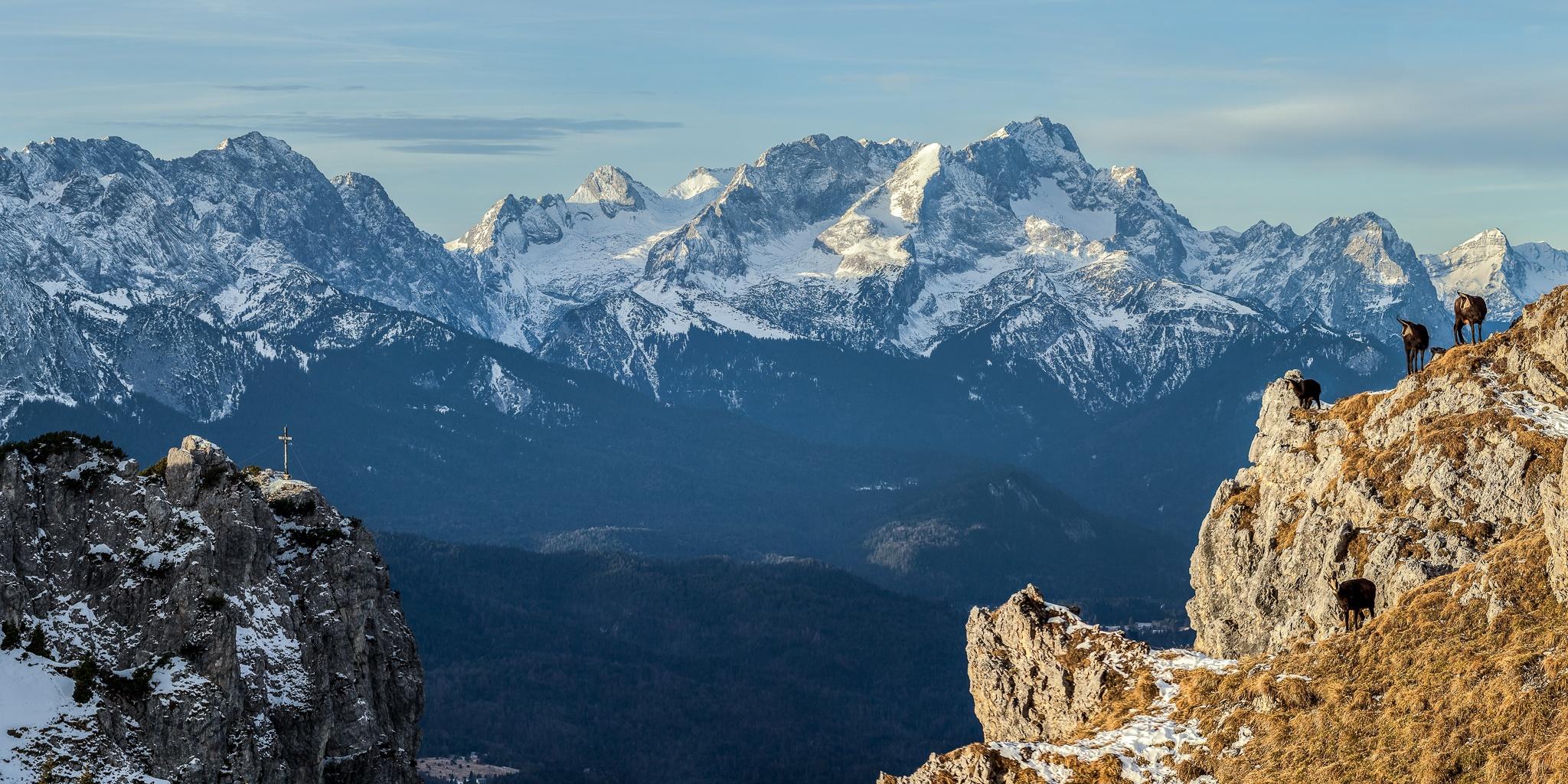 Karwendel, Soierngruppe, Panorama, Wettersteinblick, Bergpanorama, Gemsen