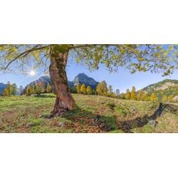 Wandbild Baum in den Bergen, Ahorn Landschaft Panorama