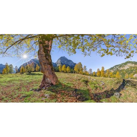 Ahorn, Baum, Herbst, Herbstlaub, Ahornboden, Tirol, Karwendel