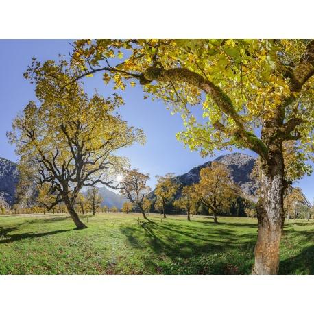 Karwendel, Ahornwald, Herbst, Ahorn, Sonne, Tageslicht, Ahornboden, Berglandschaft, Karwendelgebirge