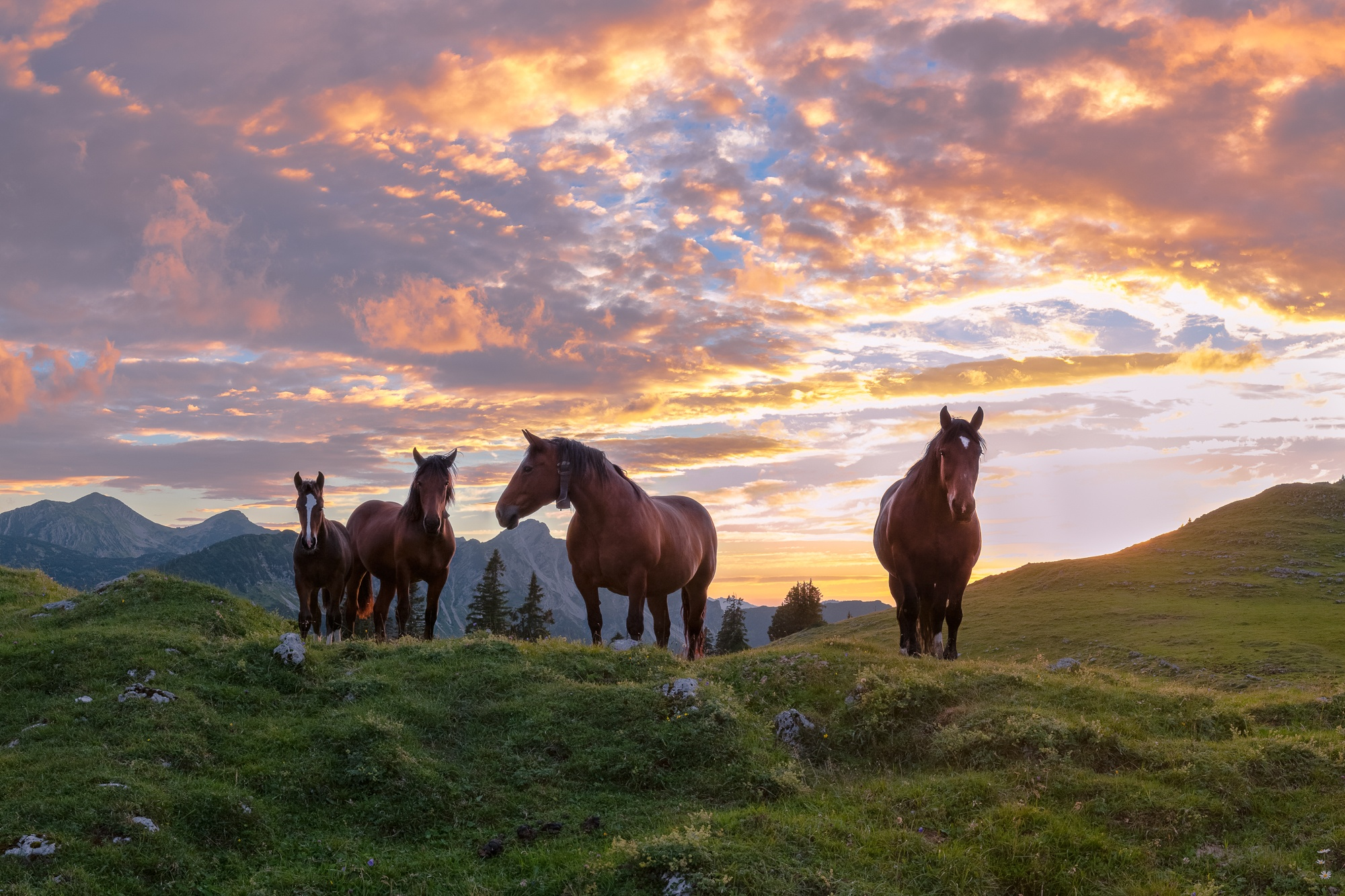 Pferde, Alm, Estergebirge, Simetsberg