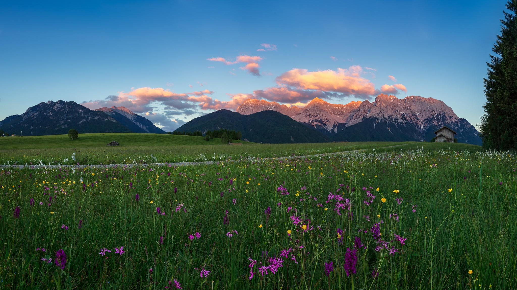 Einige Tage bevor die Wiesen gemäht wurden, konnte ich die Blumenwiesen auf den Buckelwiesen fotografieren. Blumen: Knabenkraut, Kuckucks-Lichtnelke, Hahnenfuß und Wollgras. Karwendel - Berglandschaft.