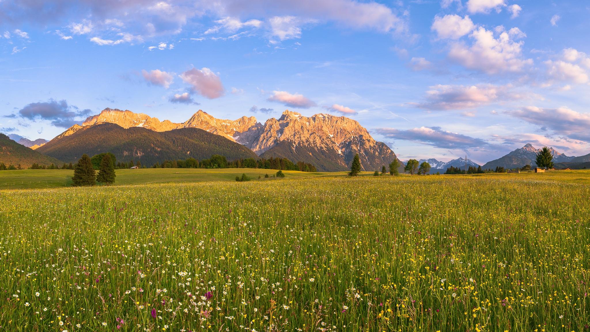 Blumenwiese auf den Buckelwiesen zwischen Krün und Mittenwald. In der Wiese sind Margeriten, Rote Lichtnelke, Scharfer Hahnenfuß & Knabenkraut.