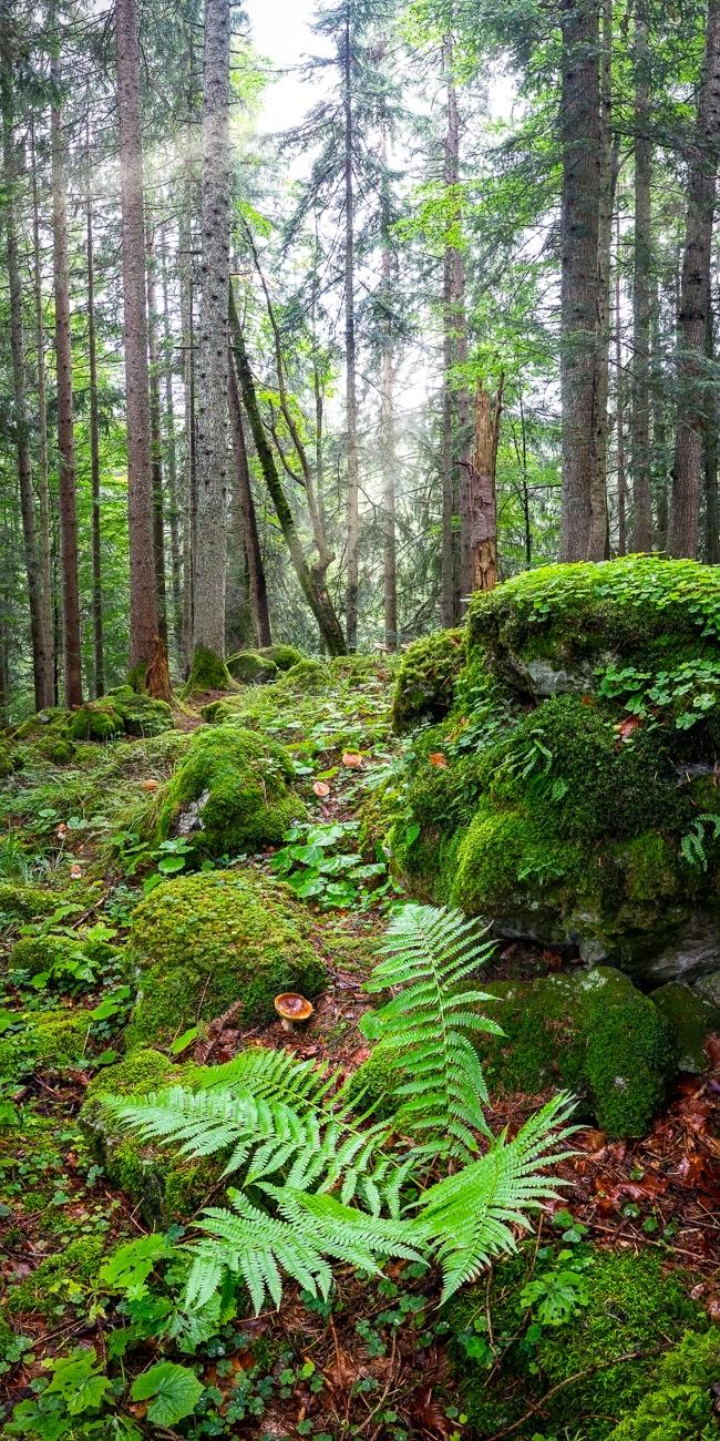 Bergwald - Waldpilze