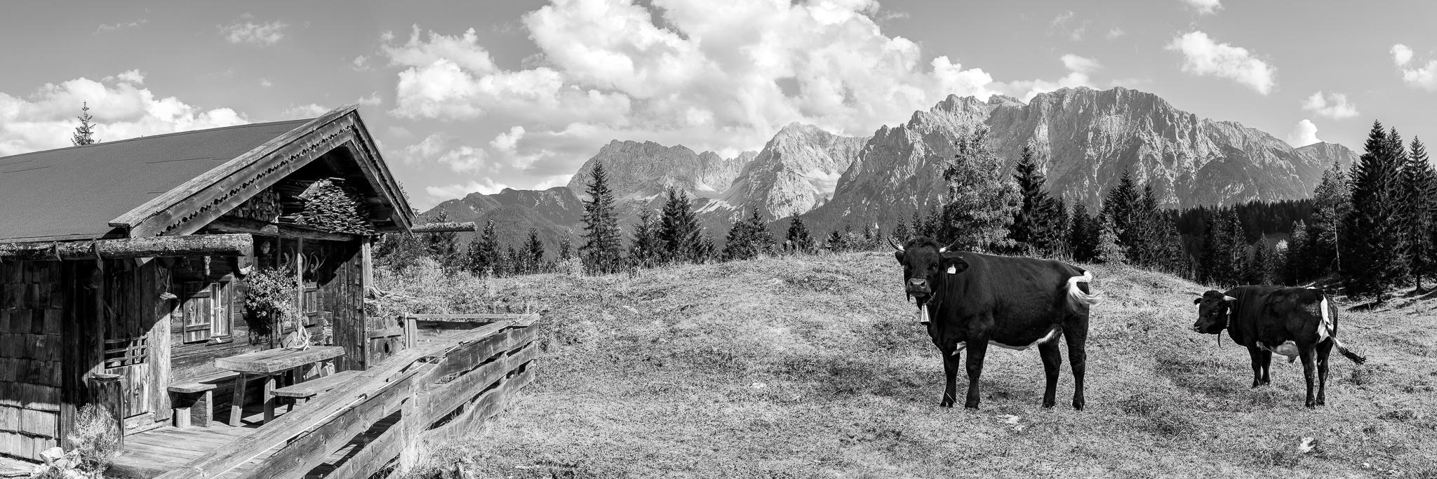Idyllisch gelegene alte Alm mit Kühen in der Alpenwelt Karwendel mit Blick auf Hoher Wörner, Tiefkarspitze, Westliche Karwendelspitze und die Linderspitze.