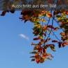 Herbstlaub - Buche