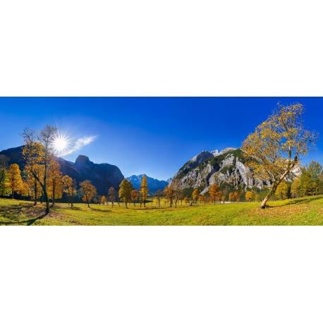 Ahornwald, Ahorn, Sonne, Tageslicht, Ahornboden, Herbst