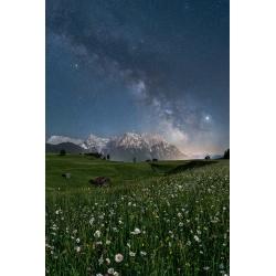 Sternenhimmel mit Margeriten