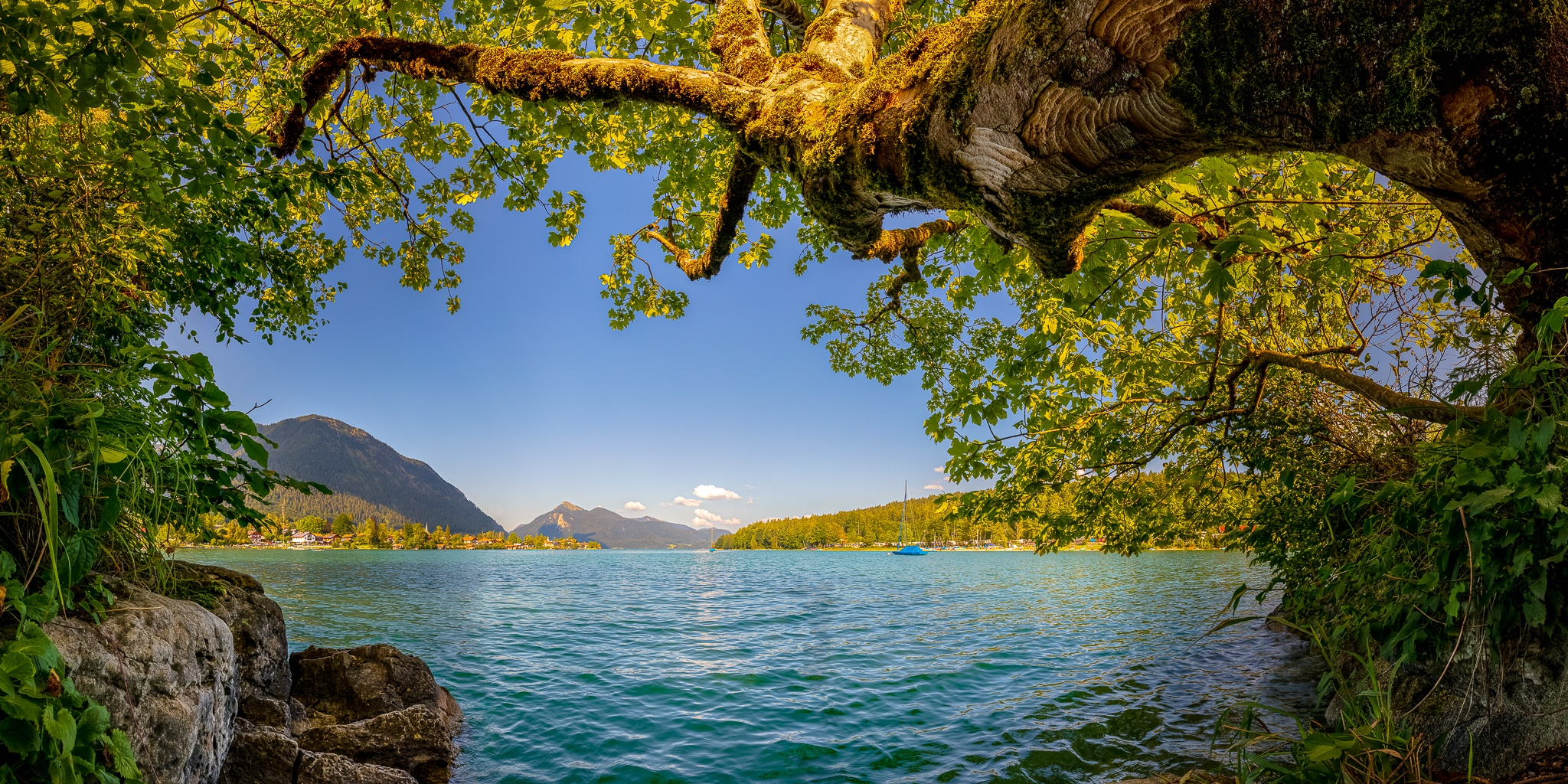 Badewetter am Walchensee, der See beeindruckt mit seinem türkisfarbenen klaren Wasser. Ein Ahorn formt den Bilderrahmen.