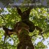 Ahorn Baum